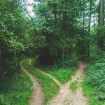 pathways_between_trees_456