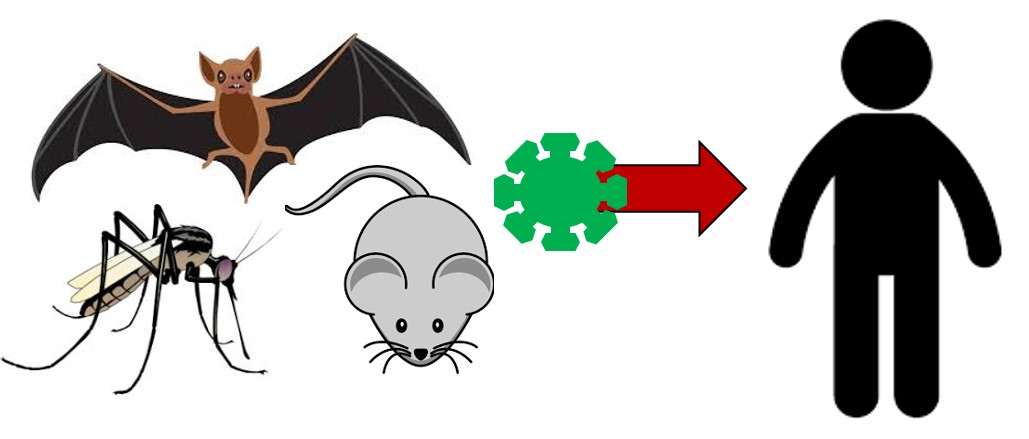zoonotic disease